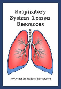Today, we are on lesson 6 - the respiratory system. No matter what curriculum you are using these respiratory system lesson resources can be a big help to you!
