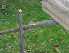 Traps - Figure-4 Deadfall - no knife