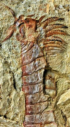 A 520 million-year-old fossilised nervous system – so well-preserved that individually fossilised nerves are visible – is the most complete and best example yet found, and could help unravel how the nervous system evolved in early animals - Complete specimen of Chengjiangocaris kunmingensis from the early Cambrian Xiaoshiba biota of South China