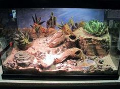 BEARDED DRAGON HABITAT 34