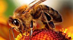Une étude d'Harvard explique pourquoi les abeilles sont toutes en train de disparaître L'homme commence vraiment à ressentir les conséquences de ses actes