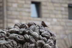 sparrow - Loggia dei Lanzi - Florence Metal Chain, Merino Wool Blanket, Tuscany, Florence, Birds, Bird, Tuscany Italy