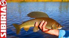 Ловля на балду. Рыбалка на хариуса на покаток (балду). Яркие моменты про...