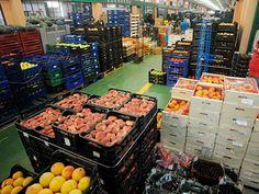 Las exportaciones agroalimentarias europeas se elevaron a 11.700 millones de euros en noviembre de 2016, 813 millones más que en el mismo mes del año anterior, informó la Comisión Europe ...