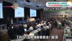 Japão continuará caça à baleia apesar da resolução do IWC. Japão planeja continuar seu programa de caça científica, apesar de uma resolução, não...