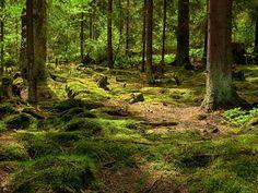 Inspiration Waldboden