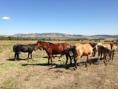 Black Hills Wild Horse Sanctuary in Hot Springs, SD