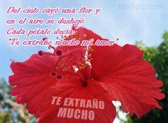 Del cielo cayó una flor y en el aire se deshojó. Cada pétalo decía: Te extraño mucho mi amor #FrasesAmor #Cursis