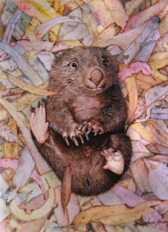 Let's take a nap. with a smile ! Happy Animals, Cute Animals, Animal Pictures, Cute Pictures, Hamsters As Pets, World Birds, Reptiles, Australia Animals, Quokka