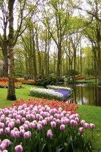 Keukenhof Gardens in Lisse, Holland