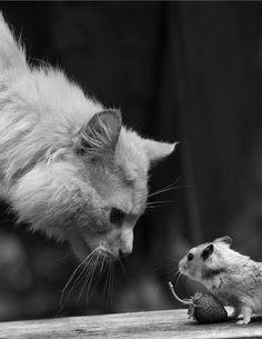 ≧っ◔‿◔)≦♡  this feels like a story where the mouse outsmarts the kitty...