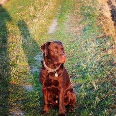 Hello my friends! I wish you a wonderful day!  #labradors_ #labradorable #labradorlove #labradorlife #labradorretriver #labradorchocolate #labradorofinstagram #dog #dog #dog #dog #dogsarebetterthanpeople #dogsareagirlsbestfriend #dogloversofinstagram #dogpark #breisach
