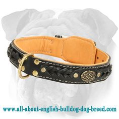 #Nappa #Padded #Braided #Leather #Collar for #English #Bulldogs $59.90 | www.all-about-english-bulldog-dog-breed.com