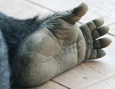 gorilla fingers - Google Search