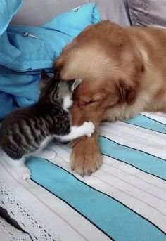 Pin by Torsten on Animals and pets [Video] Cute Funny Animals, Cute Baby Animals, Funny Cute, Funny Dogs, Animals And Pets, Cute Cats, Nature Animals, Wild Animals, Cute Animal Videos