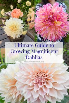 flower garden Learn to grow your own dahlias in this step-by-step guide. Dahlias make excellent cut flowers for bouquets and arrangements, and are very easy to grow! Come get all my tips and tricks for homegrown, magnificent dahlias. Garden Cactus, Cut Flower Garden, Flower Farm, Garden Plants, Cut Garden, Flowers For Cutting Garden, Shade Garden, Small Flower Gardens, Flower Garden Design