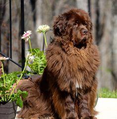 Samson in the Spring of 2015