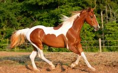 Riding horse wallpapers and images - wallpapers, pictures, photos