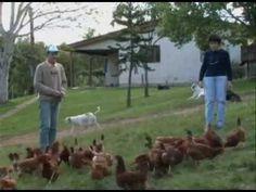 Produção de ovos orgânicos - Programa Rio Grande Rural - YouTube