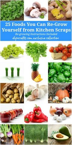 25 Foods You Can Re-Grow Yourself from Kitchen Scraps - for more details see on the process for each fruit or veggie: http://www.diyncrafts.com/4732/repurpose/25-foods-can-re-grow-kitchen-scraps
