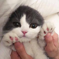 awwww cute cat!