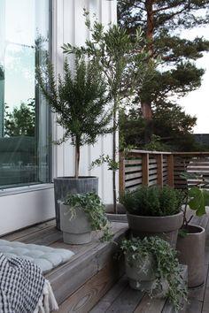 I går satte jeg igang med runde nummer to med planting Outdoor Life, Outdoor Spaces, Outdoor Gardens, Outdoor Living, Outdoor Decor, Winter Balkon, Casa Real, Terrace Garden, Plantation