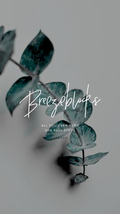 Minimal Design + Photography | alt j breezeblocks lyrics by KAESPO Design