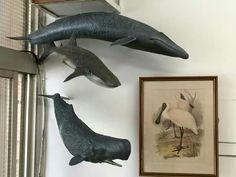 Kaiyodo baleias whales