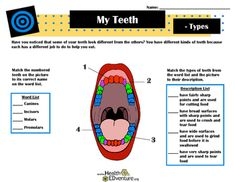 This activity provides students with an easy to understand and colorful diagram of the mouth and teeth. Students learn basic anatomy, as well as the functions of different types of teeth. Find over 330 learning activities at the Health EDventure store.