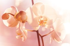 Orchid by Joni El on 500px