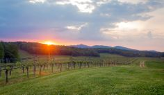 Spring sun set in #Biltmore's vineyards in #Asheville, #NC