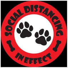 Social Distancing Floor Decals 10 inches Multiple colors Dog | Etsy