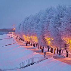 🖤 Winter Trees in Night Lights Winter Szenen, Winter Love, Winter Magic, Winter Christmas, Winter Trees, Christmas Snowman, Beautiful World, Beautiful Places, Beautiful Pictures