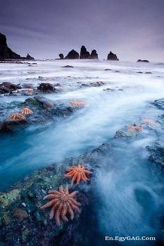 West Coast star fish colony, New Zealand