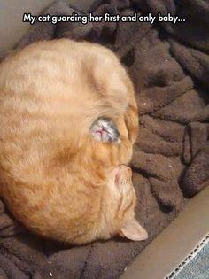 Mon chat gardant son premier et seul bébé ...