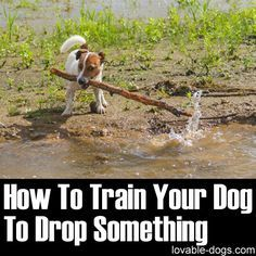 How To Train Your Dog To Drop Something ►► http://lovable-dogs.com/how-to-train-your-dog-to-drop-something/?i=p