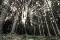 Sognsvann Lake Forest by Dimitris Drougoutis on 500px