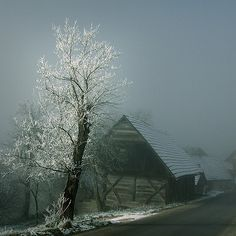 foggy frost on old barn
