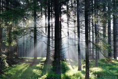 Bewegende Bilder - Fotoparade 2020 | Austria Insiderinfo Bokeh, Austria, Instagram, Plants, Motto, Macro Shots, Morning Light, Long Exposure, Moving Pictures