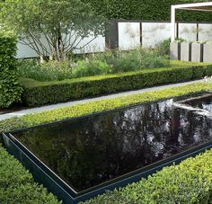 Pond surrounded by hedge, Savills Garden, Chelsea 2008