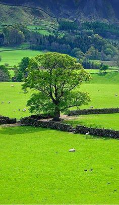 Stone Fence, Mersey, England