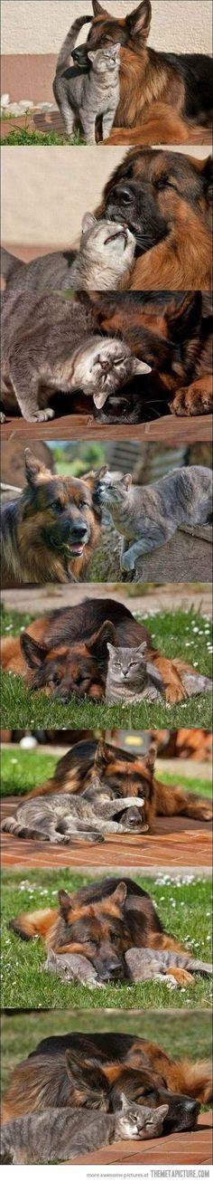 funny cat dog best friends