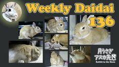 Weekly daidai 136