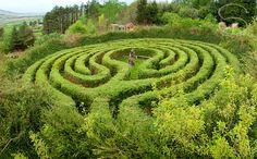 Labyrinth Maze:  A garden labyrinth.