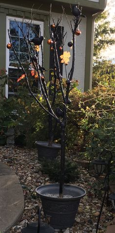 Halloween trees made from tree branches, concreted into containers and spray painted.