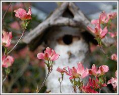 Dogwood tree with birdhouse bokeh by picma, via Flickr