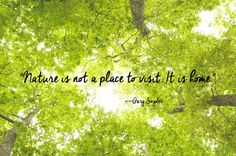 New short nature quotes trees words 30 ideas Short Nature Quotes, Short Quotes, Beauty In Nature Quotes, Caption For Nature Beauty, Quotes About Nature, Quotes About Home, Natural Beauty Quotes, Tree Quotes, Quotes About Trees