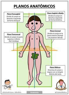 Planos Anatómicos, Anatomía Básica Chuleta