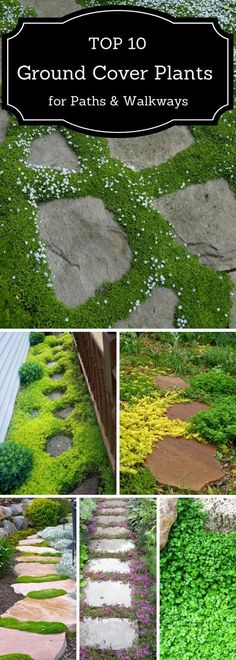 If you are looking for a way to beautify your pathway, check out these 10 plants that'll thrive there easily. garden pathway TOP 10 Plants and Ground Cover for Your Paths and Walkways Unique Garden, Diy Garden, Dream Garden, Garden Paths, Lawn And Garden, Garden Projects, Spring Garden, Shade Garden, Herb Garden