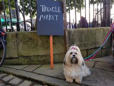 Treacle Market | Macclesfield | Cheshire